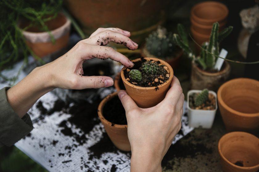 Pflanzen Für Das Büro